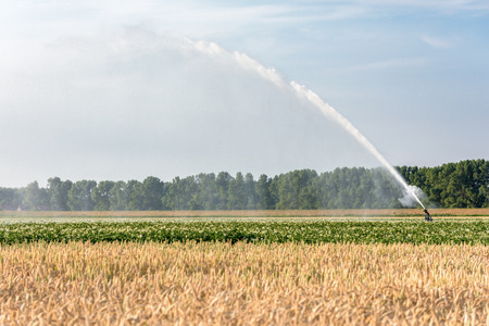 A sprinkler is watering farmland with potatoes and grain in the Netherlands during a period of extreme drought in the summer of 2018.