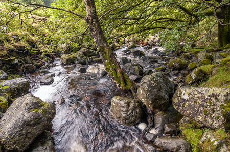 Barrow Beck flowing under the trees near Ashness Bridge in the Lake District National Park, England.