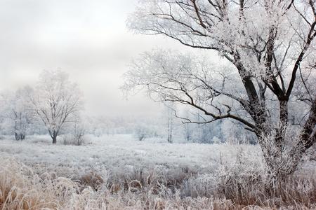 paysage du soir d'hiver avec des chutes de neige