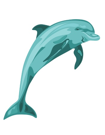 dolphins: vector dolphin jumping Illustration