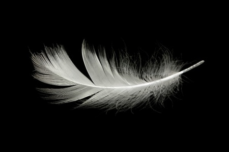 black and white: white feather against black