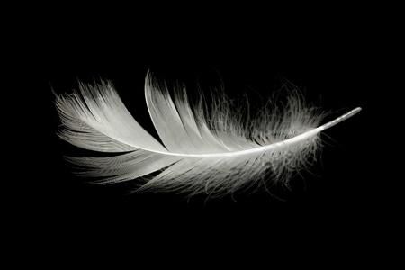 검은 색에 흰색 깃털
