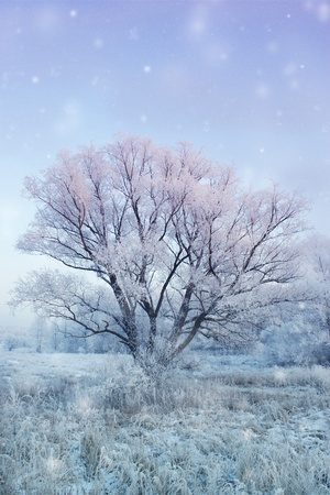 winter fairy-tale photo