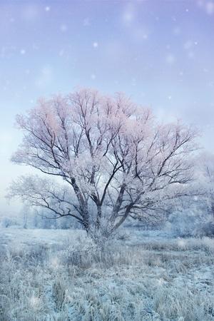 winter fairy-tale photo