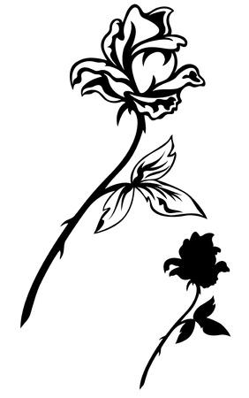 rose bud: elegant rose illustration - outline and silhouette