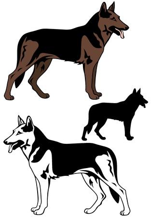 shepherd with sheep: sheep dog vector illustration Illustration