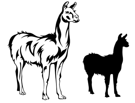 alpaca: llama vector illustration