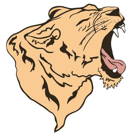 snarling: growling lion vector illustration Illustration