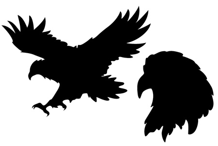 wildlife: eagle silhouettes  Illustration