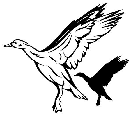 アヒル: フライング鴨ベクトル イラスト - 黒と白のアウトライン