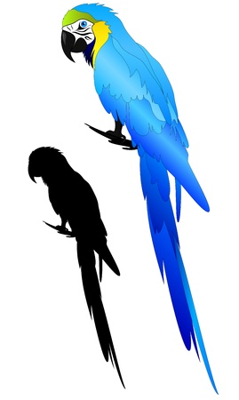 macaw: beautiful Blue-and-yellow Macaw parrot vector