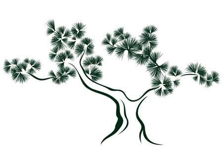 bonsai: pine tree vector illustration