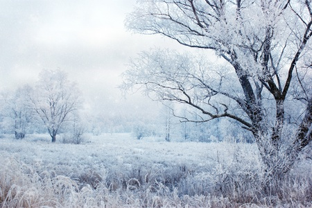 snow falling: winter evening landscape with falling snow  Stock Photo