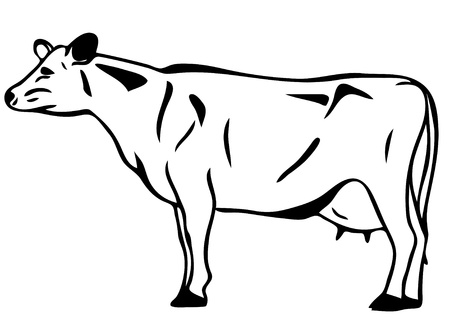 husbandry: vector cow Illustration