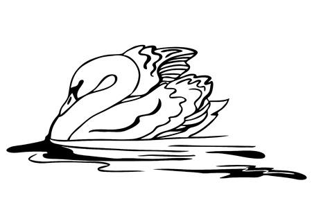 swimming swan: vector swan swimming Illustration