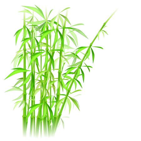 bamboo leaves: bamboo vector illustration Illustration