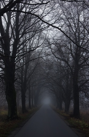 mystery woods: dark road Stock Photo