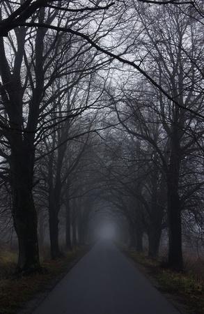 gloomy: dark road Stock Photo