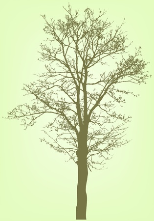 vector tree silhouette Stock Vector - 11345036