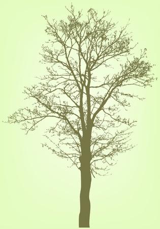 bare: vector tree silhouette Illustration