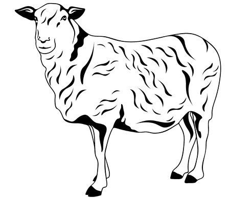 mutton: standing sheep black and white vector illustration