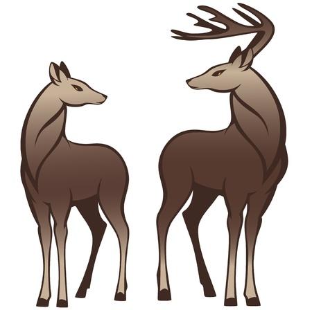 doe: pair of beautiful deers looking at each other