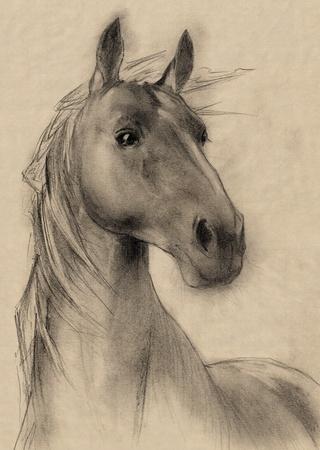 cabeza de caballo: caballo a mano alzada la cabeza l�piz de dibujo Foto de archivo