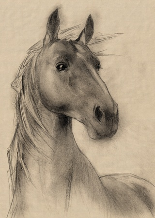 cabeza de caballo: caballo a mano alzada la cabeza lápiz de dibujo Foto de archivo