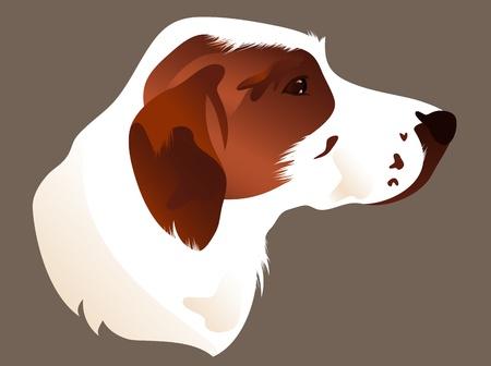 setter: hunting dog head vector illustration