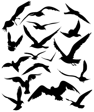 flying birds: set of seagulls silhouettes - black flying birds on white Illustration
