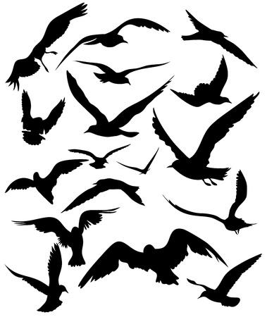 gaviota: un conjunto de siluetas de gaviotas - negros pájaros que vuelan sobre un fondo blanco