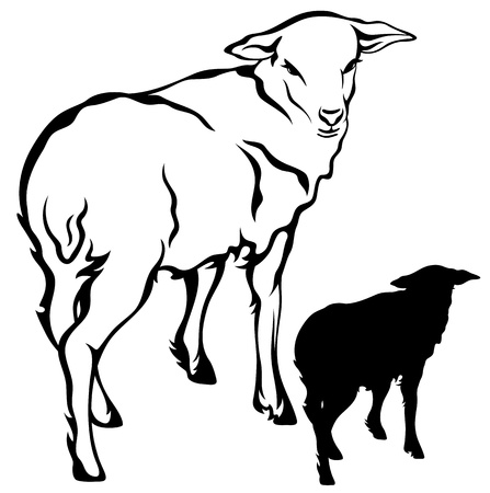 flock of sheep: cute little lamb vector illustration - black outline against white
