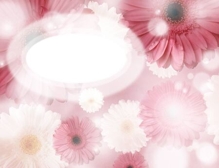 shining pink gerbera flowers background with place for your text Stock Photo - 13079225
