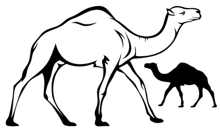 camels: walking single-humped camel black and white outline