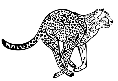 running cheetah fine vector illustration - black and white outline Vector