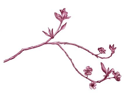 ブルーミング サクラ支店 - ピンクの色合いで詳細な鉛筆