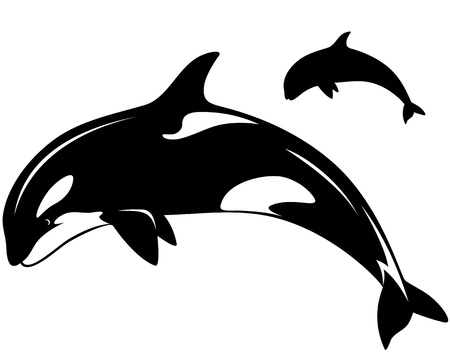 killer whale illustration - black and white outline and silhouette Vector