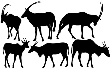 scimitar: antelopes (Scimitar oryx and Common eland) silhouettes - black outlines over white Illustration