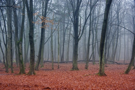 autumn woods - mysterious creepy landscape photo