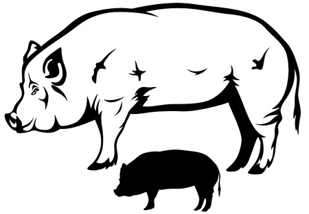 fat pigs: big hog black and white  outline and silhouette Illustration
