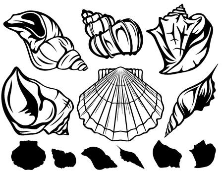 petoncle: ensemble de coquillages en noir et blanc - vecteur de collecte des contours fins Illustration