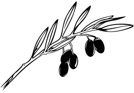 olive branch black and white realistic outline Vector