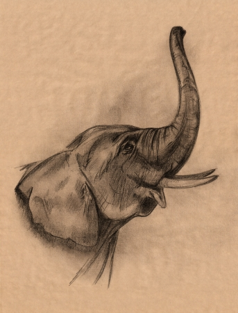 elephant head pencil drawing in shades of brown photo