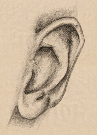 human ear pencil drawing - fine graphite outline over beige photo