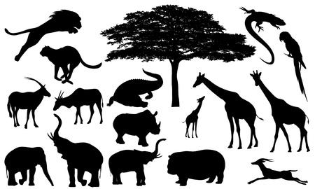 animales safari: African Wildlife vector siluetas finas - fauna en blanco y negro y flora esquemas detallados Vectores