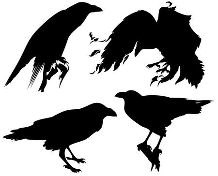 corbeau: oiseaux corbeau silhouettes
