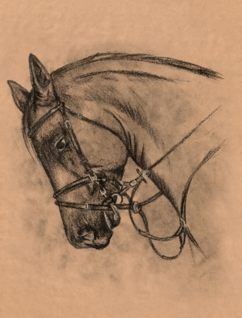 harness: horse head with harness charcoal and pencil drawing Stock Photo
