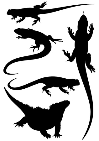 iguana: lizards fine silhouettes - detailed black outlines over white - vector set