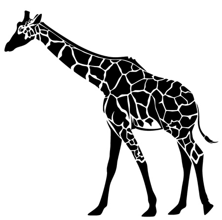 girafe: cute giraffe vector illustration - black and white stylized outline of an elegant animal
