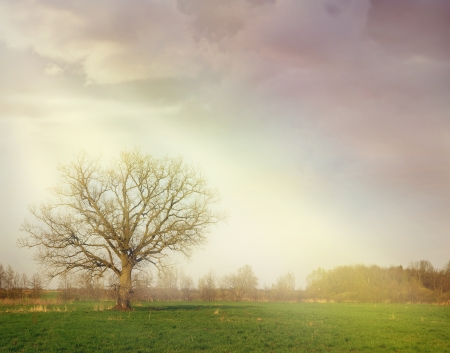 nature of sunlight: fantasy landscape with a tree among sun rays - stormy sky with heavy clouds and light beams